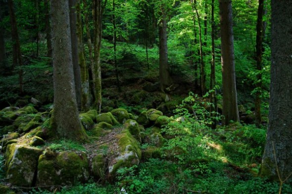 лес Шварцвальд