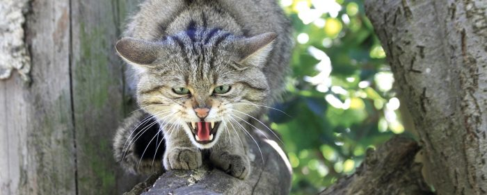 Дикий кот в парке Айфель