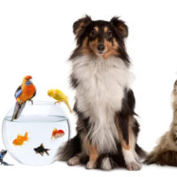 Домашние животные в Германии