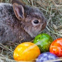 Как принято праздновать Пасху